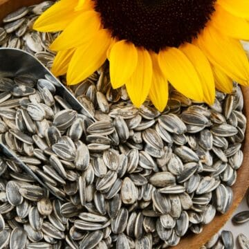 Would you like to have more options available for flour alternatives on the keto diet? Sunflower seed flour is something you should consider.